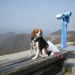 お花の名所 滋賀県の伊吹山を愛犬と散策 ゴールデンウィーク4泊5日 関西旅行を満喫 Part4