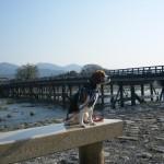 愛犬と京都の渡月橋と嵯峨野を観光 ゴールデンウィーク4泊5日 関西旅行 Part1