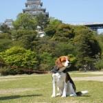 世界遺産に輝く姫路城の庭を愛犬と散策 ゴールデンウィーク4泊5日 関西旅行を満喫 Part2