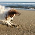 ここほれワンワン!関東内で愛犬と一緒に潮干狩りが出来るスポット6選!