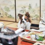 愛犬と特別な日こそお部屋食!関東近辺で部屋食プランがあるペット宿10選!