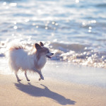 日帰りも可能!愛犬と九十九里で行きたいご当地グルメとビーチエリア観光ガイド!