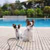 愛犬と一緒に水遊びをしよう!神奈川県でドッグプールがあるスポット5選!