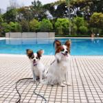 愛犬と一緒に水遊びをしよう!神奈川県でドッグプールがあるスポット6選!