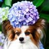 ドッグランやBBQも!南関東で愛犬と紫陽花が見られる公園厳選9選!