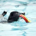 愛犬と水遊びで運動不足解消!千葉県でドッグプールがあるスポット8選!