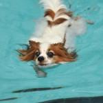 愛犬と本格的なドッグプール!埼玉県にあるプール付ドッグラン6選!