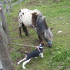 ちび愛犬と蓼科旅行!信州白樺高原で初めてのゴンドラリフトと大きな動物との出会い♪