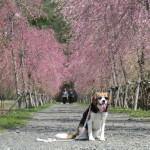 四季折々の花の楽園「花の都公園」で富士山を眺めながらお散歩♪<山梨県・南都留郡>