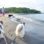 ビーチや海鮮料理!砂山も!?館山で愛犬と楽しめる観光スポット7選!