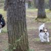 山梨県は約8割が森林!? 山梨県内にある大自然ドッグラン8選!
