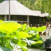 夏と言えば「はす」!南関東で愛犬と一緒に蓮が見られる公園9選!