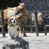 愛犬と一緒に富士登山!山開きに合わせて6合目まで歩いてみました!
