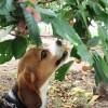 愛犬も一緒♪山梨県のさくらんぼ狩りでおなかいっぱい食べてきたよ<山梨県・甲府市>