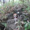 夏のおすすめ散策コース!森林浴を楽しみながら美し森登山<山梨県北杜市>