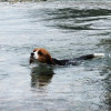 白馬村の清流で大はしゃぎ♪大型犬も泊まれるペンション「ピレモン」 - 避暑地で人気の白馬旅行 Part1