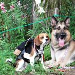 愛犬と一緒にゴンドラに乗って白馬岩岳ゆり園へ - 避暑地で人気の白馬旅行 Part2