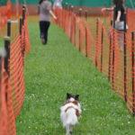 関東周辺で愛犬と誰でも参加ができる夏休みのドッグスポーツイベント5選