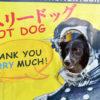 愛犬と横須賀市「どぶ板通り」夕方から一味違うミステリアスな散歩!