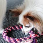 旅先でも可能! 誰にでも簡単に作れる低コスト愛犬用DIYおもちゃ5選!