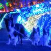 関東周辺で愛犬とサマーイルミネーションを楽しめるイルミスポット6選!