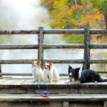 温泉が流れる川「大湯沼川」の天然足湯で愛犬の肉球もモチモチ<北海道 登別市>