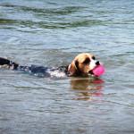 泳ぎが得意なわんちゃんは大喜び♪本栖湖でス~イスイ