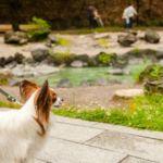 愛犬との観光で押さえておきたい草津周辺のスポット集