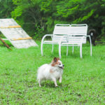 広いドッグランサイトで愛犬も大喜び!森林ドッグランや川遊びもできる「那須高原アカルパ」
