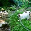 無料キャンプ場!?「小滝沢キャンプ場」の神秘的な川で愛犬と日帰り水遊び!<茨城県高萩市>