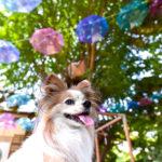 千葉市周辺の愛犬と一緒に行けるフォトジェニックなカフェ5選