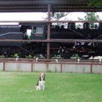愛犬と一緒に野辺山の飯盛山登山と周辺散策<長野県・南佐久郡> その2