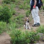 愛犬と一緒に野辺山の飯盛山登山と周辺散策<長野県・南佐久郡> その1