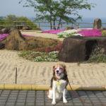 人気温泉地「熱海」で見つけた、休日に愛犬と楽しめる観光スポット10選