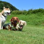 広大な自然の中で愛犬と思いっきり遊ぼう!広島県でドッグランがあるスポット3選!