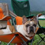 開放感抜群!夏休みに愛犬と一緒に楽しめる関東のバーベキュースポット