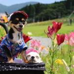 愛犬と一緒に那須旅行!夏休みにおすすめの観光スポットをご紹介