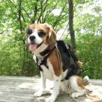 愛犬と一緒に那須塩原旅行♪その1 <県南大規模公園でハイキング>