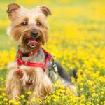 愛犬との散歩がルンルン気分で楽しめる、静岡のフラワーパーク3選!