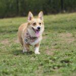 愛犬と一緒にリフレッシュ!関東近郊おすすめサービスエリア5選
