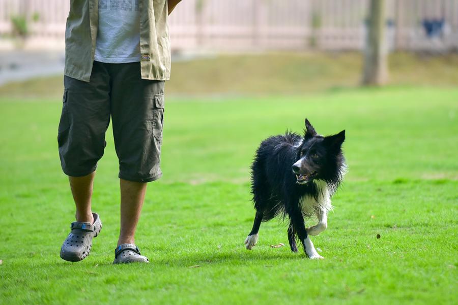 ドッグランに誰もいない!そんな時に愛犬を運動させるためのアイディア集