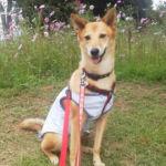 秋のお散歩におすすめ!愛犬と一緒に昭和記念公園に行ってみた!