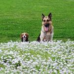 山中湖2泊3日ぐるり旅!その1 -愛犬と一緒に花の都公園と富士山4合目を散策-