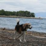愛犬と日帰りふたり旅!大瀬神社~ビャクシン樹林~大瀬崎の神池
