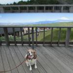 愛犬と一緒に箱根旅行!日本一長い吊り橋スカイウォークと仙石原 すすき草原