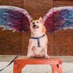 もうすぐ動物愛護週間。大切なペットと一緒にMARINE & WALK YOKOHAMAで過ごしてみませんか?