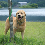 のんびり田舎道をドライブしながら、田貫湖周辺でワンちゃんと遊ぼう!
