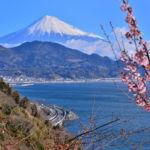 静岡市清水区のさった峠の絶景を見ながら、愛犬とハイキングを楽しもう!
