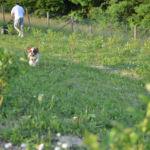 愛犬と秋の味覚狩り+αを満喫できる広島の農園スポット3選