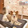 大切な愛犬の健康のために!関東のワンちゃん専用フィットネス5選
